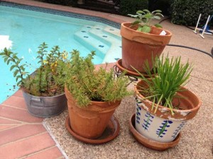 Rosemary, Mint, Chives, Sage