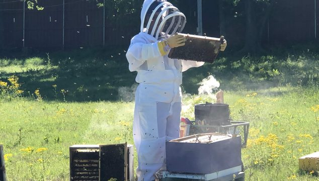 Enthusiastic beekeeper doing a hive inspection